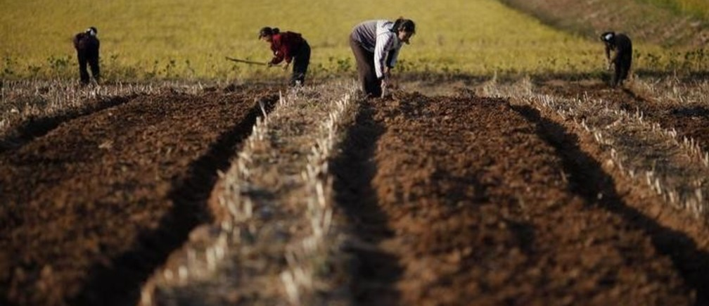 EDITORS NOTE: PICTURES TAKEN ON A GOVERNMENT CONTROLLED TOUR FOR REUTERS ALERTNET North Korean farmers work in a field of a collective farm in the area damaged by recent floods and typhoons in the South Hwanghae province September 30, 2011. In March, the World Food Programme (WFP) estimated that 6 million North Koreans needed food aid and a third of children were chronically malnourished or stunted. Rising global commodities prices, sanctions imposed for its nuclear and missile programmes, and its dysfunctional food distribution system had created a hunger crisis in the North, even before devastating summer floods and typhoons compounded the emergency.  Picture taken September 30, 2011.   To match Special Report KOREA-NORTH/FOOD      REUTERS/Damir Sagolj   (NORTH KOREA - Tags: SOCIETY POVERTY)