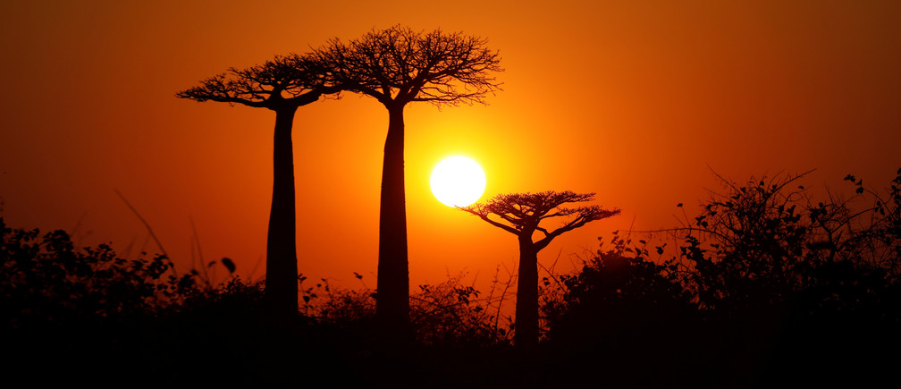 4 ways to become a 'business baobab' on the African economic landscape