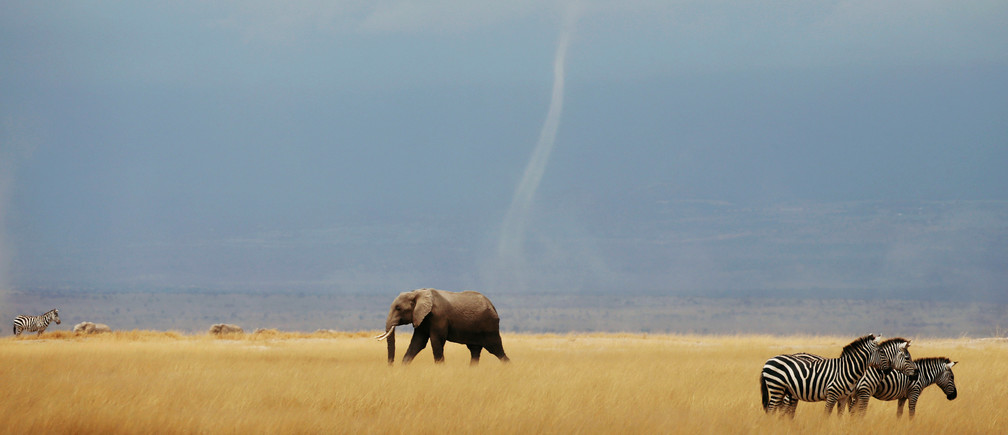 A whirlwind is seen as elephant and zebras walk through the Amboseli National Park, Kenya August 19, 2018. REUTERS/Baz Ratner - RC13CCE970A0