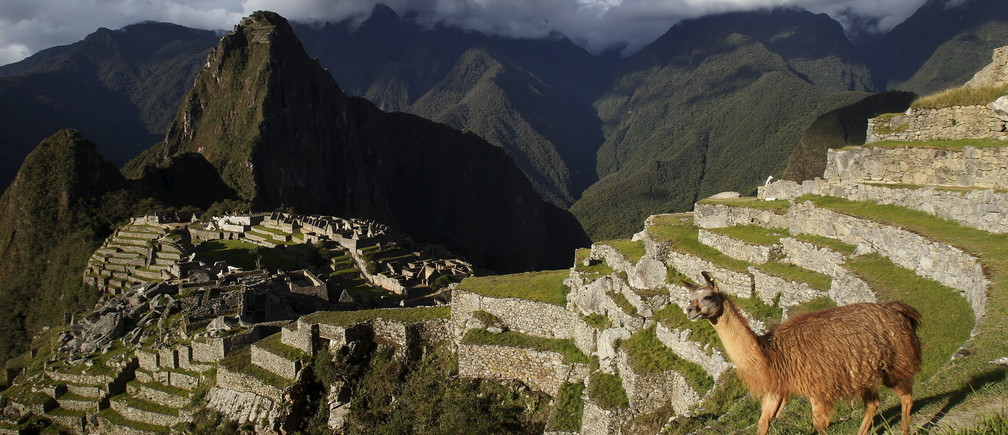 A llama is seen near the Inca citadel of Machu Picchu in Cusco, Peru, in this December 2, 2014 file photo. REUTERS/Enrique Castro-Mendivil/Files - GF10000372285