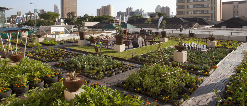 A rooftop garden on a building across the street from the International Covention Centre where the United Nations Climate Change Conference (COP17) continues in Durban December 7, 2011.