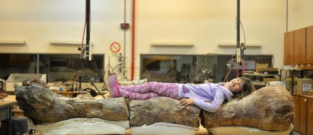 Marlene lies over the original fossilised femur of a dinosaur displayed on exhibition at the Egidio Feruglio Museum in the Argentina's Patagonian city of Trelew, May 18, 2014. According to the palaeontologists Jose Luis Carballido and Ruben Cuneo, the fossils are that of a sauropod and preliminary tests dates the fossils at some 90 million years old. The scientists said the dinosaur could be 130 feet long and 65 feet tall, and weigh at 85 tons, and it is a previously undiscovered species of titanosaur, an herbivore, which lived during the Late Cretaceous period. REUTERS/Maxi Jonas (ARGENTINA  - Tags:  ANIMALS SCIENCE TECHNOLOGY) - GM1EA5J02FU01