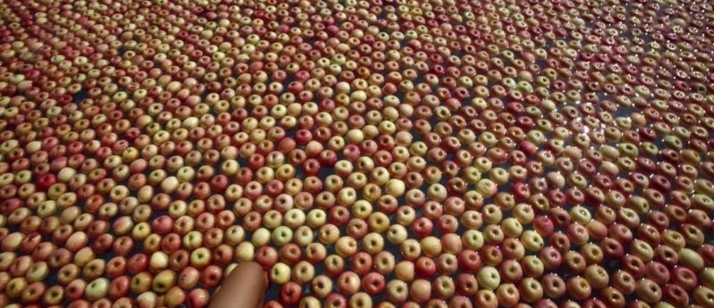 """A woman steps into a swimming pool with some 20,000 apples in it during a photo session in an attempt to set the national record for """"The Most Number of Apples Used In Spa Therapy"""" in Port Dickson, 120 km (75 miles) south of Kuala Lumpur May 13, 2007.  REUTERS/Bazuki Muhammad (MALAYSIA) - GM1DVGCNPFAA"""