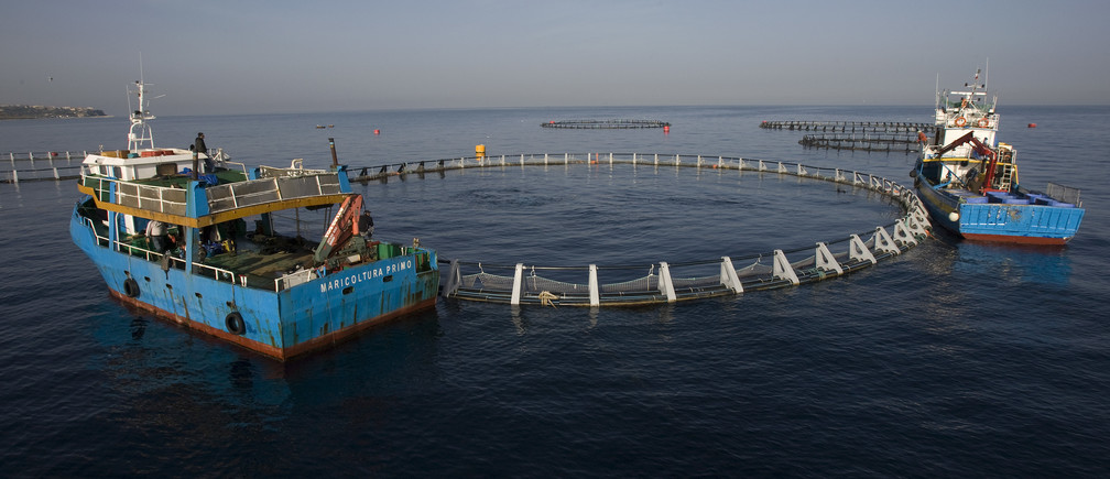 Fish transport ships lie close to a tuna cage off the Calabrian coast in southern Italy.