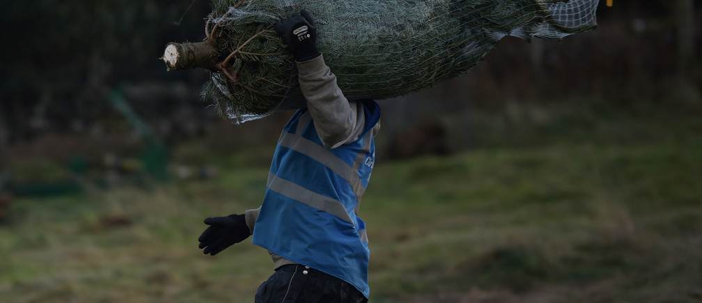 A farm worker carries a bagged Christmas tree to a customer at Wicklow Way Christmas tree farm in Roundwood, Ireland December 9, 2018. REUTERS/Clodagh Kilcoyne - RC183E3950D0