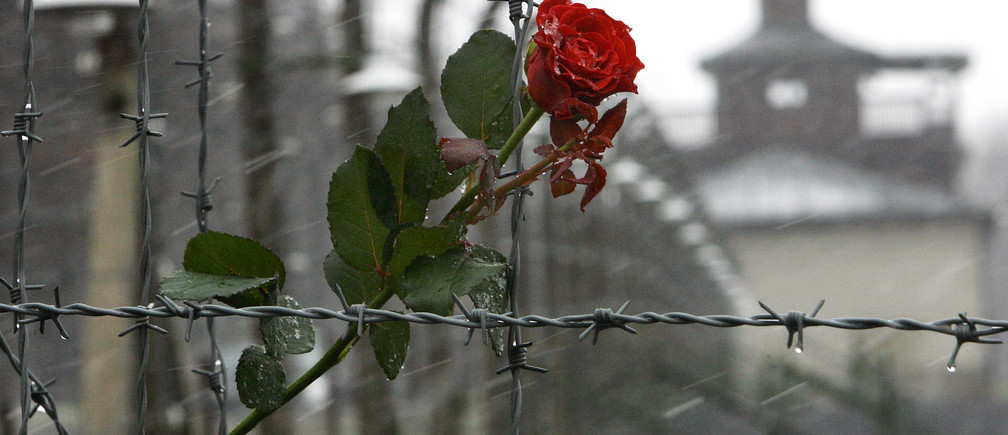 A rose is seen attached to barbed wire at the former Buchenwald Nazi death camp near Weimar in Thuringia April 9, 2005.