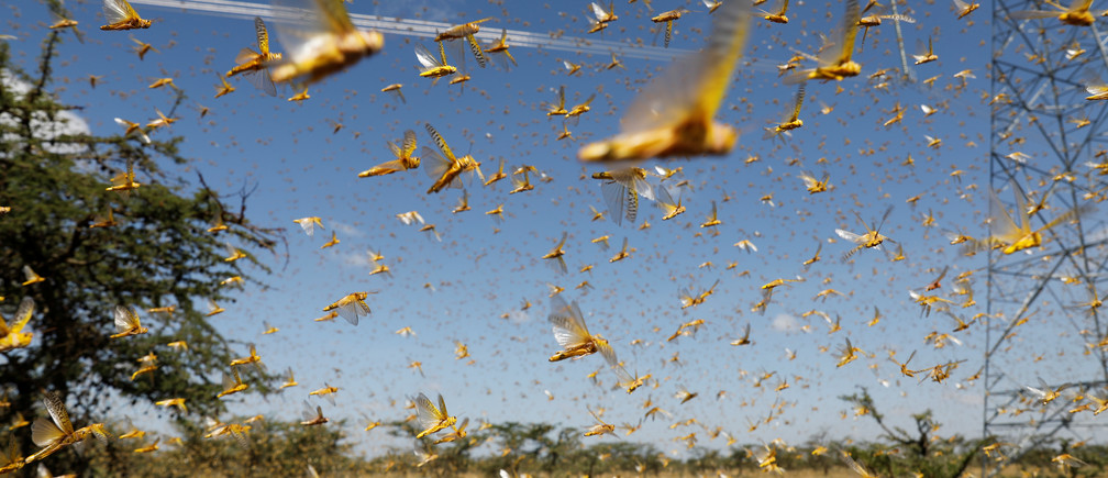 A swarm of desert locusts flies over a ranch near the town of Nanyuki in Laikipia county, Kenya, February 21, 2020. Picture taken February 21, 2020. REUTERS/Baz Ratner - RC219F9GZZX8