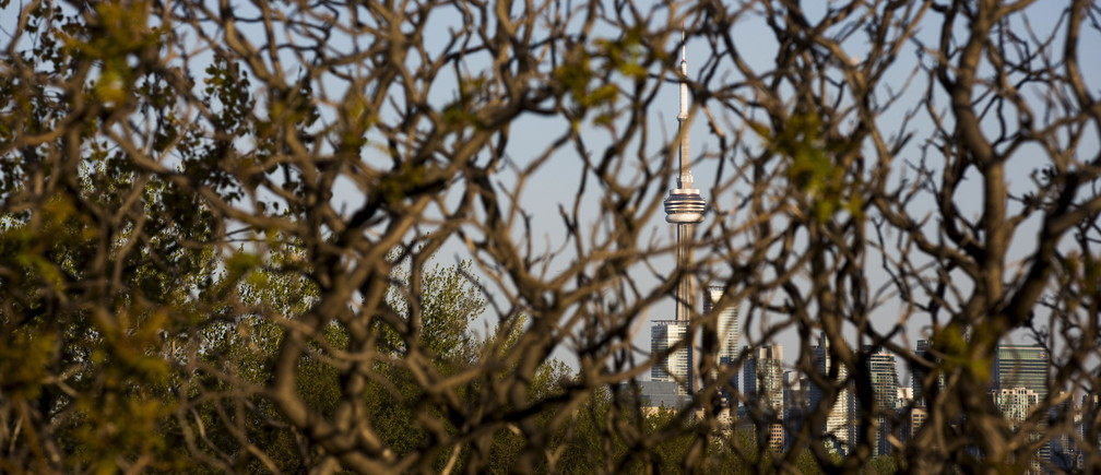 """The CN Tower is seen through branches at Tommy Thompson Park located on a man-made peninsula known as the Leslie Street Spit, in Toronto May 24, 2015. It was created over 60 years ago by the dumping of dredged sand, concrete chunks and earth fill, expanding what was once just a thin strip of land in the city's busy harbor. An unexpected urban oasis, the development brings marshes, lagoons and forests to the centre of Canada's largest city. REUTERS/Mark BlinchPICTURE 9 OF 29 FOR WIDER IMAGE STORY """"EARTHPRINTS: LESLIE STREET SPIT""""SEARCH """"LESLIE SPIT"""" FOR ALL IMAGES - GF10000216969"""