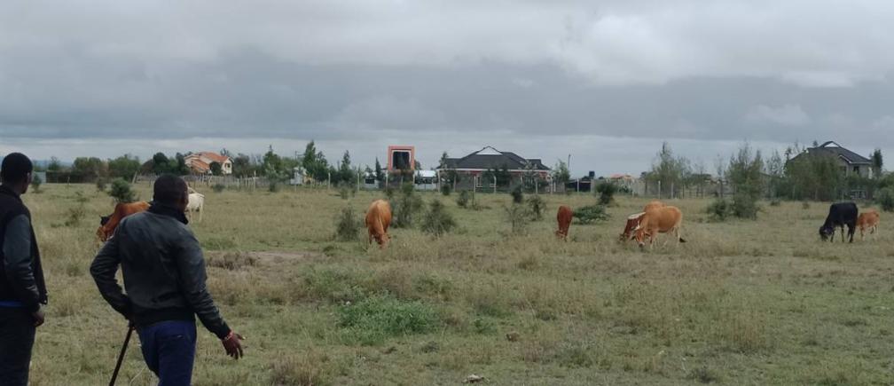 Brian Kikon and his friend herd his cattle near palatial homes that have started eating into pasture land at at Isinya, Kajiado County, Kenya, May 26, 2019. Thomson Reuters Foundation / Benson Rioba