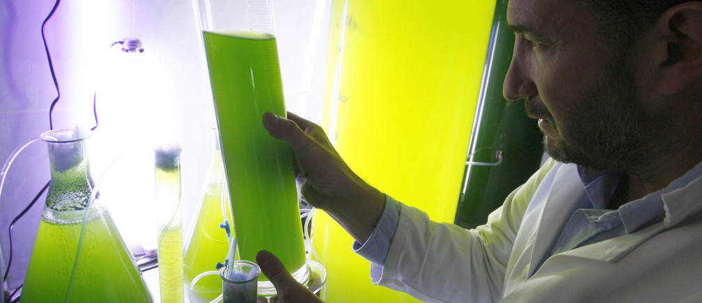 A French entrepreneur checks prototype street lamps filled with chlorella seaweed.