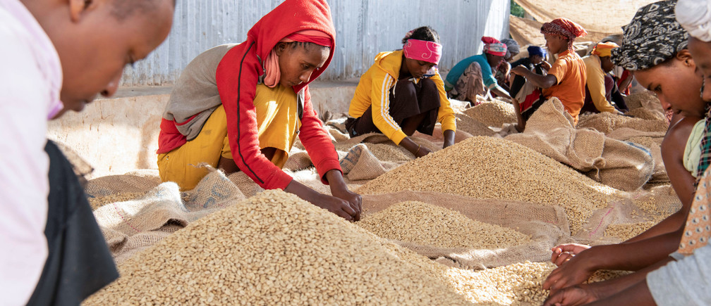 Women pick unwanted coffee beans from the final product just before packaging in Holiso cooperative of Shebedino district in Sidama, Ethiopia November 30, 2018. Picture taken November 30, 2018. REUTERS/Maheder Haileselassie - RC1A79217960