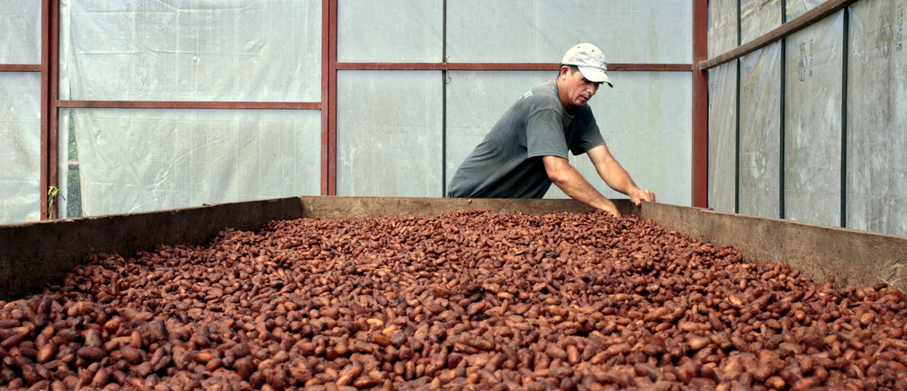 "A worker dries cocoa beans at the ""Jorge Salazar"" Cooperative in the town El Tule in Matagalpa, Nicaragua January 8, 2016. Soaring temperatures in Central America due to climate change are forcing farmers to pull up coffee trees and replace them with cocoa, spurring a revival in the cultivation of a crop once so essential to the region's economy. Picture taken January 8, 2016. REUTERS/Oswaldo Rivas - GF20000089476"