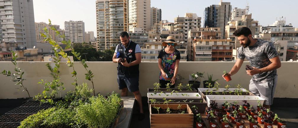 La gente trabaja en las plantas de la azotea de un edificio, ya que muchos libaneses se dedican a cultivar verduras y frutas en sus casas mientras la pandemia de la enfermedad coronavirus (COVID-19) golpea la economía en colapso y los costos de los alimentos se disparan a nuevas alturas, en Beirut, Líbano, el 17 de mayo de 2020.