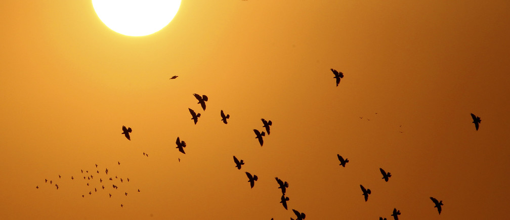 Doves, silhouetted against the rising sun, fly over the Jordanian capital of Amman September 5, 2013. REUTERS/Muhammad Hamed (JORDAN - Tags: ANIMALS SOCIETY) - GM1E9960BH802