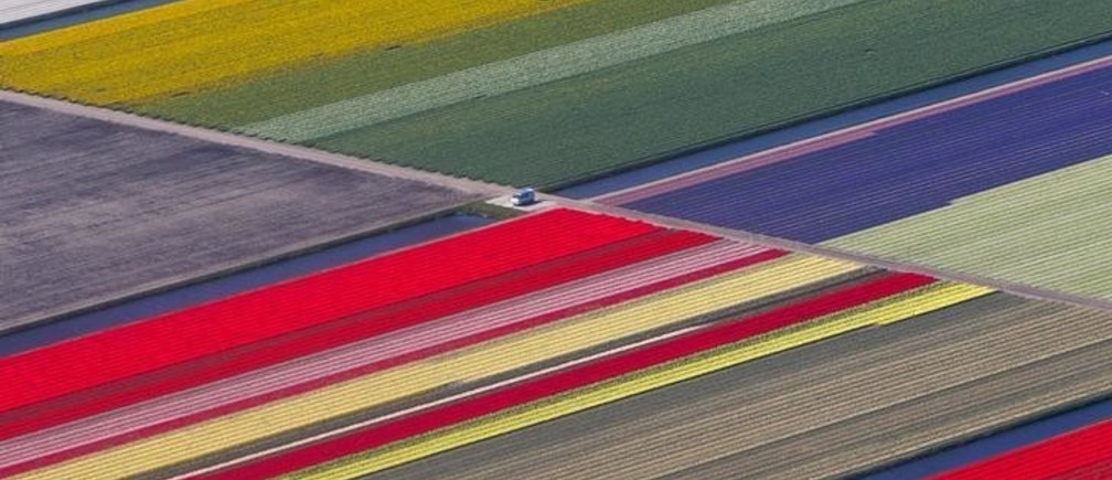 An aerial view of flower fields is seen near the Keukenhof park, also known as the Garden of Europe, in Lisse ,The Netherlands April 15, 2015. Keukenhof, employing some 30 gardeners, is considered to be the world's largest flower garden displaying millions of flowers every year. REUTERS/Yves Herman