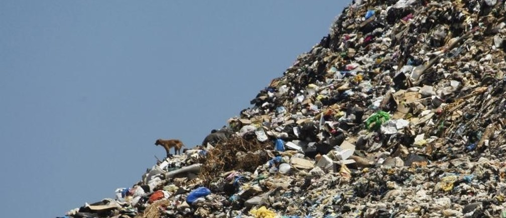 A stray dog stands on a rubbish dump at the seafront in Sidon, southern Lebanon, June 9, 2012. The dump, located near schools, hospitals and apartment blocks in Lebanon's third biggest city, has partially collapsed into the Mediterranean sea several times. REUTERS/Ali Hashisho   (LEBANON - Tags: ENVIRONMENT ANIMALS TPX IMAGES OF THE DAY) - GM2E8691K1T01