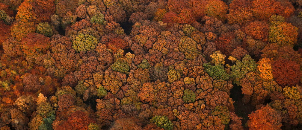 An aerial view shows a deciduous forest on a sunny autumn day in Recklinghausen, Germany, October 31, 2015.   REUTERS/Ina Fassbender - GF20000040187