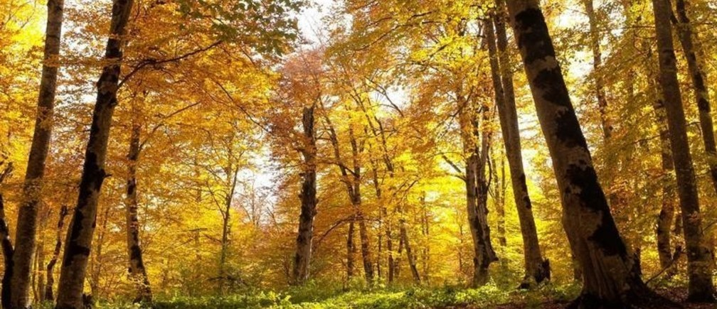 Autumn colours are seen in a forest outside Tbilisi, Georgia October 25, 2017. REUTERS/David Mdzinarishvili - RC17E0B8E610