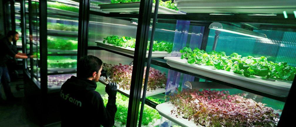 An employee of the urban farming start-up Infarm checks an indoor growing system.