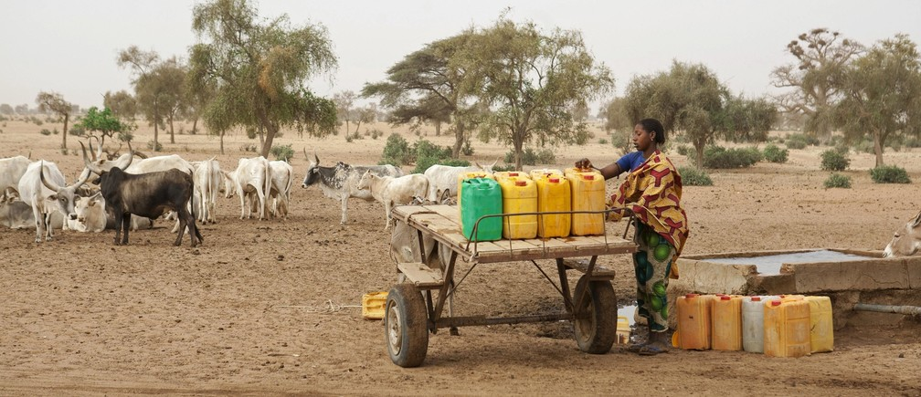 A woman fills jerry-cans with water for her cattle herd in Richard-Toll, Senegal, January 28, 2015.