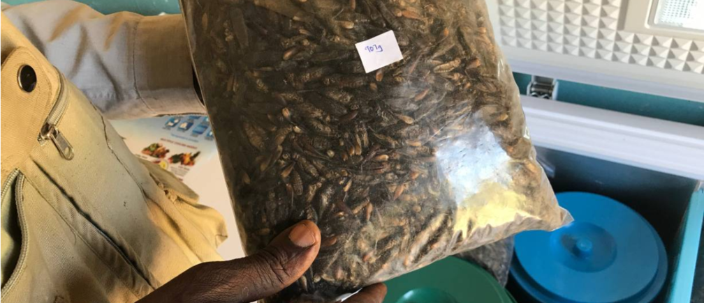 A farmer holds a bag of whole freeze-dried crickets for sale at a farm shop selling a range of fresh, frozen and dried cricket products in Kisumu, Kenya, February 13, 2018. Photo from original article.