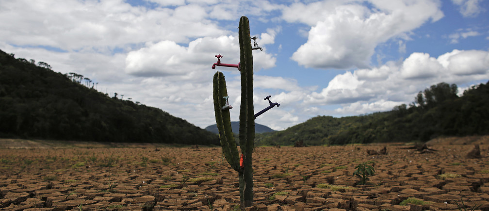 "A drought-related cactus installation called ""Desert of Cantareira"" by Brazilian artist and activist Mundano is seen at Atibainha dam, part of the Cantareira reservoir, during a drought in Nazare Paulista, Sao Paulo December 2, 2014."