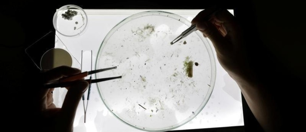A scientist looks at sea sample taken from the Mediterraneean Sea as part of a scientific study about microplastics damaging marine ecosystems, at the Villefranche Oceanographic Laboratory (LOV), in Villefranche-Sur-Mer on the French Riviera, France, October 19, 2018. Picture taken October 19, 2018. REUTERS/Eric Gaillard - RC18456531F0