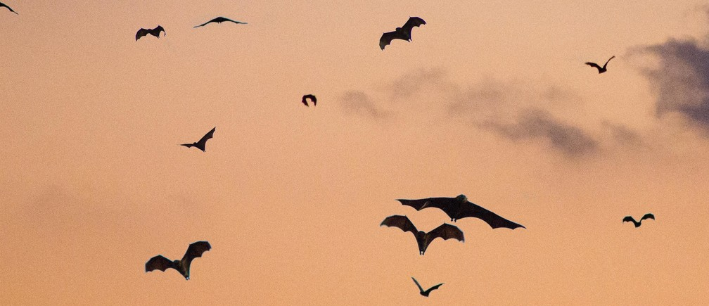 bats flying night sky