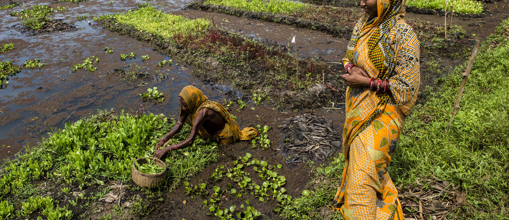 Village: Totasahi, Panchayat: Sukala Block: Stayabadi District: Puri,  State: Odhisa ,  India, 3rd  March 2014:65 years old, Hara Maharana (L) picks spinach from her floating garden as her daughter in law  Laxmi looks on in Totashi village, Puri, Odhisa, India, March 3, 2014.  Hara Maharana and her daughter in law, 38 year old Laxmi pluck spinach from floating gardens in water logged area filled with water hyacinth. The vegetables primarily used for domestic consumption saves them money by serving as a kitchen garden.  UNDPâ??s partnership with the govt of Odisha and supported by the Australian Agency for International Development is helping communities in Puri in Odisha adapt to extreme weather events. Close to 2,100 hectares of land was cultivated in 2012, more than three times that of 2011 in Bambarada village of Puri