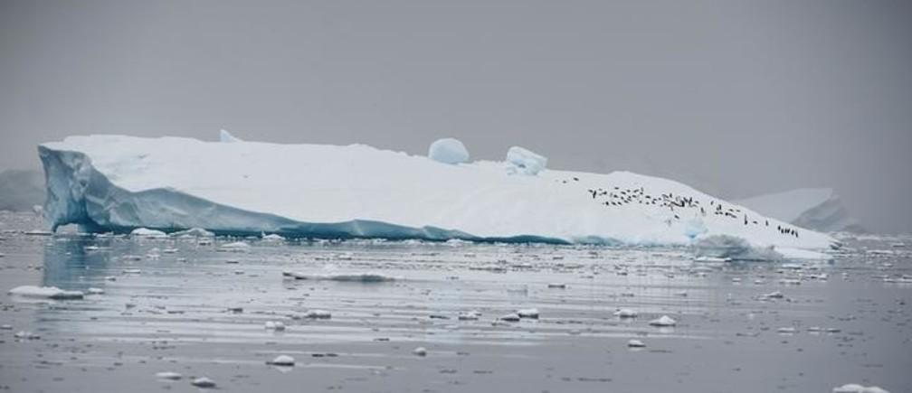 An iceberg floats in Andvord Bay, Antarctica, February 14, 2018. REUTERS/Alexandre Meneghini