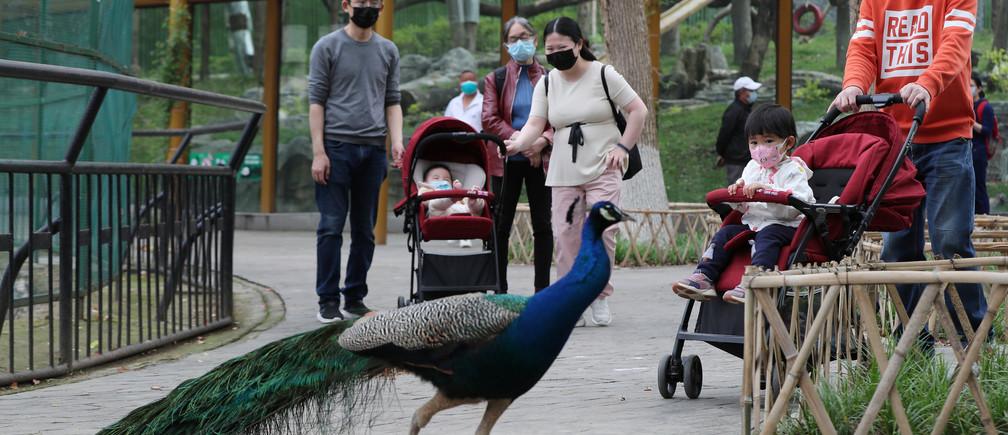 Los visitantes que llevan máscaras faciales se ven en el Zoológico de Wuhan en su primer día de reapertura tras el brote de la nueva enfermedad coronavirus (COVID-19), en Wuhan, provincia de Hubei, China, el 22 de abril de 2020.