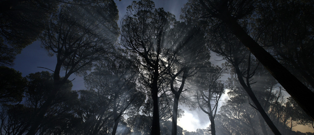 Trees are shrouded in smoke during a blaze on the slopes of Cape Town's Table Mountain, February 13, 2009.