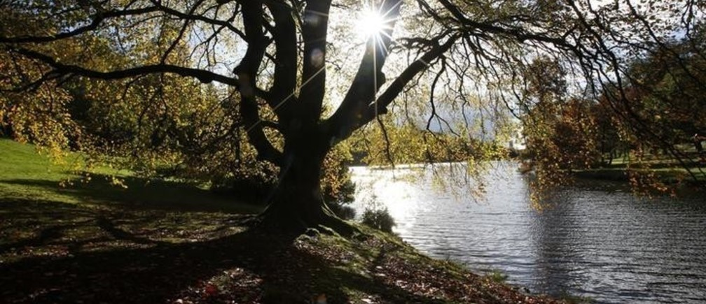 The autumn sun shines through a tree almost stripped of its leaves at Stourhead Gardens in Wiltshire, southern England November 3, 2013. REUTERS/Olivia Harris (BRITAIN - Tags: ENVIRONMENT)