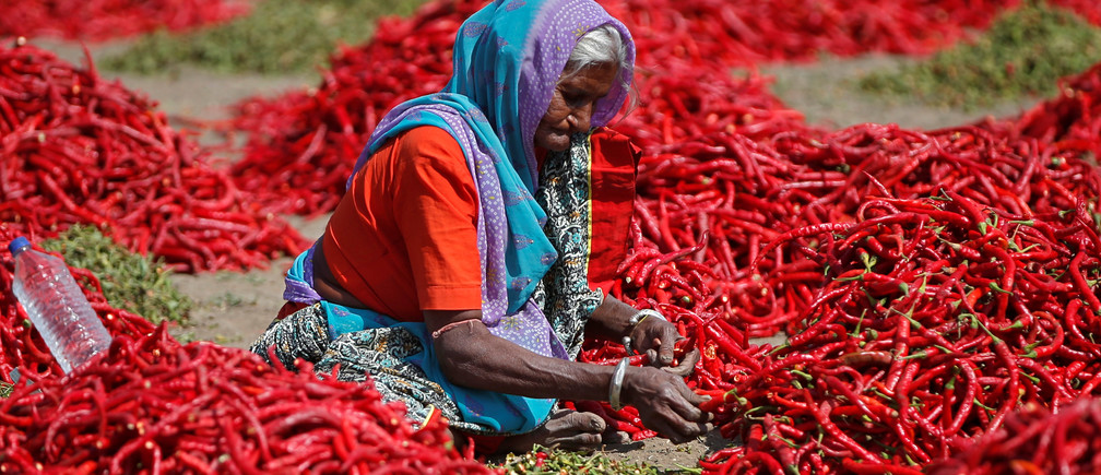 A woman removes stalks from red chilli peppers at a farm in Shertha village on the outskirts of Ahmedabad February 6, 2019. REUTERS/Amit Dave - RC1BC27CB470