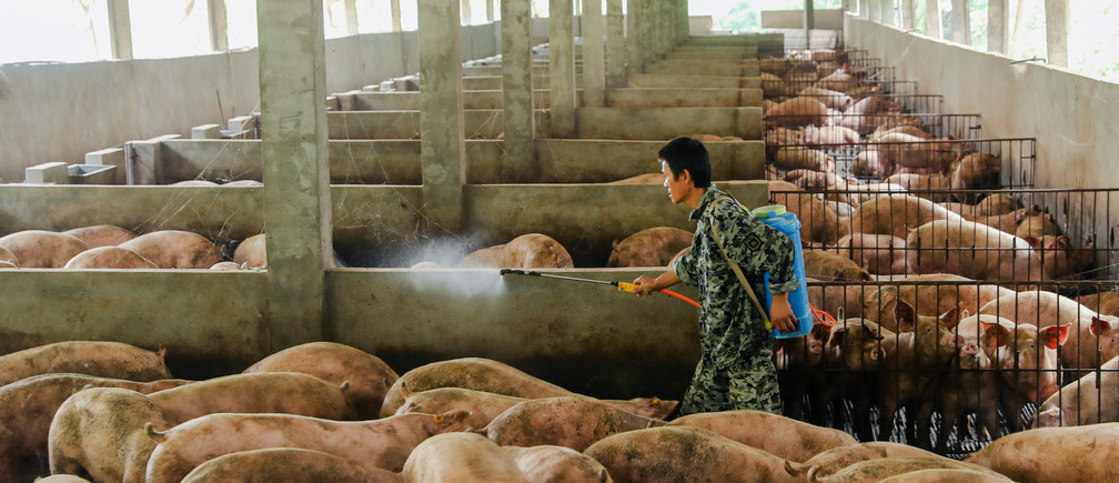 A man disinfects a pig farm in Guangan, Sichuan province, China.
