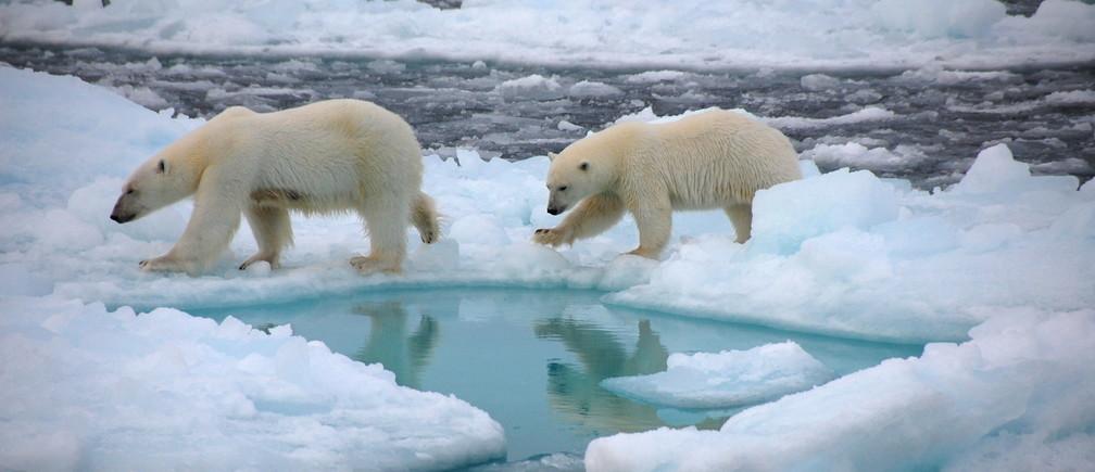 Que signifie un habitat libre de glace pour la faune qui en dépend ?