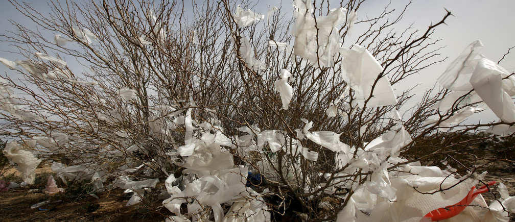 Plastic bags trapped in a bush are seen on the side of a road in Ciudad Juarez, Mexico February 27, 2019. Picture taken February 27, 2019. REUTERS/Jose Luis Gonzalez - RC1DFC086170