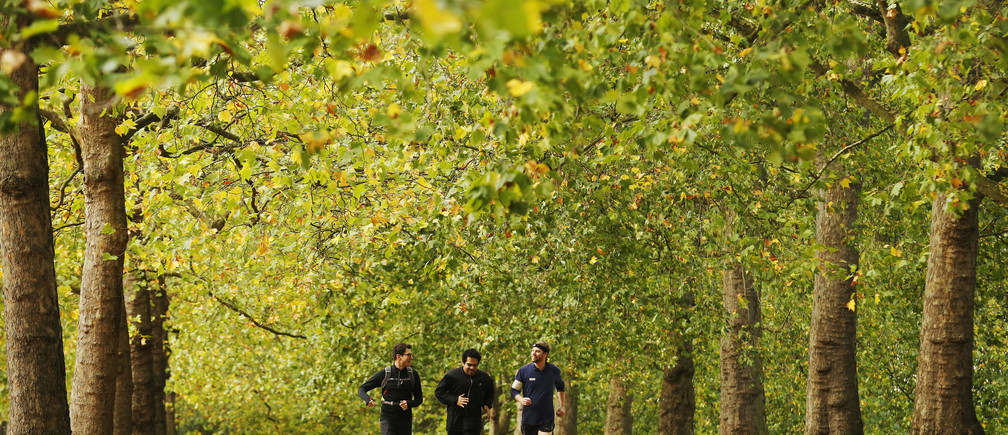 Joggers run along an avenue of trees during autumn at St James's Park in London October 27, 2013. REUTERS/Luke MacGregor (BRITAIN - Tags: ENVIRONMENT SPORT) - GM1E9AR1LU901