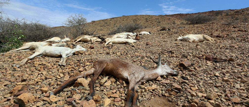 "Carcasses of goats are seen near Jidhi town of Awdal region, Somaliland April 10, 2016. Across the Horn of Africa, millions have been hit by the severe El Nino-related drought. In Somaliland and its neighbouring, also semi-autonomous, Puntland region, 1.7 million people are in need of aid, according to the United Nations. In Somaliland itself, the most affected areas include the northwest Awdal region bordering Ethiopia. REUTERS/Feisal Omar    SEARCH ""DROUGHT SURVIVAL"" FOR THIS STORY. SEARCH ""THE WIDER IMAGE"" FOR ALL STORIES - GF10000397809"