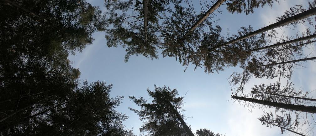 Los bosques juegan un papel vital en la extracción de CO2 del medio ambiente.