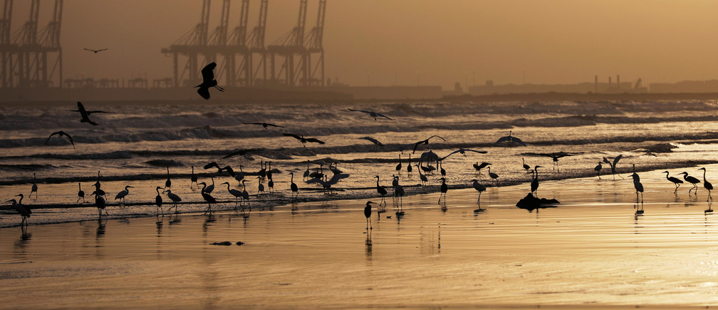 A flock of migratory birds is seen during suset along Clifton Beach, as the spread of the coronavirus disease (COVID-19) continues, in Karachi, Pakistan May 16, 2020. Picture taken May 16, 2020. REUTERS/Akhtar Soomro - RC21FH9AP0LH