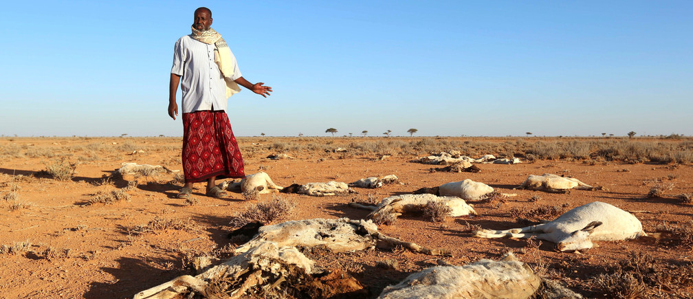 An internally displaced man looks at the carcasses of his goats and sheep in the outskirts of Dahar town of Puntland state in northeastern Somalia, December 15, 2016. REUTERS/Feisal Omar - RC1510A62970
