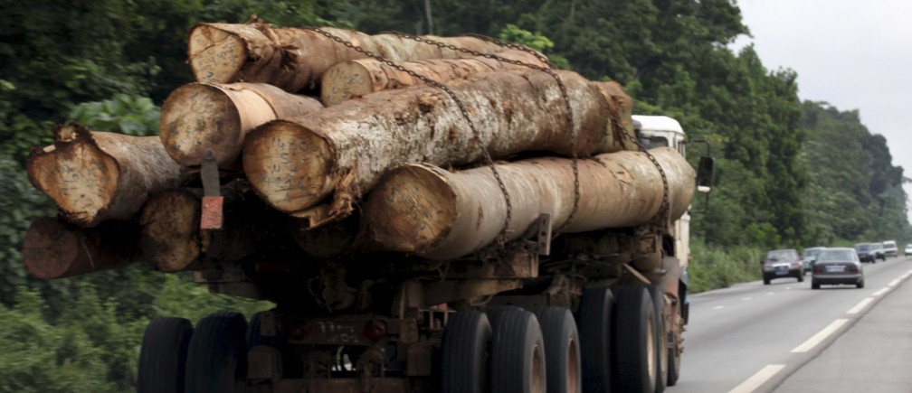 Logging and farming are threatening Africa's jungles, including the Congo Basin and the Guinean Forests