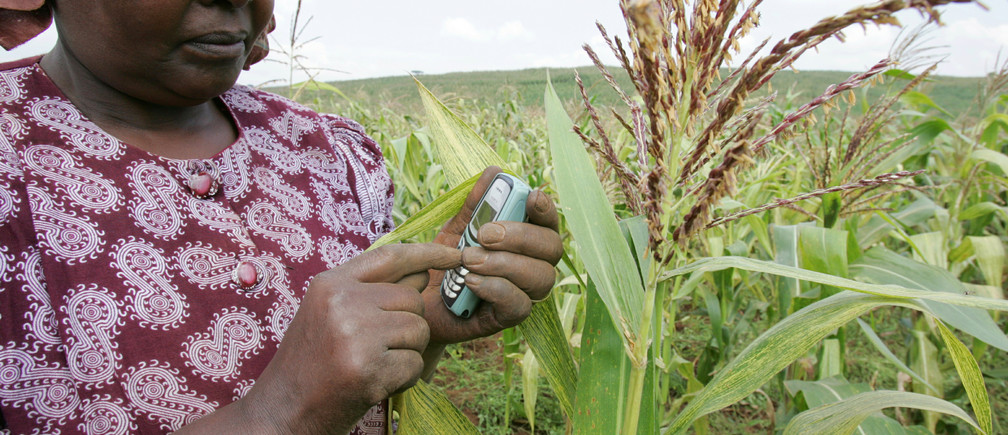 A Kenyan farmer sends a text message to enquire about the latest maize prices from her maize fields in Thigio 35km (22 miles) from the capital Nairobi June 23, 2005. Mobile phones have become the most essential work item for Kenya's small businesses. In June 1999, Kenya had only 15,000 mobile phone subscribers but by the end of 2004, the country had 3.4 million subscribers, according to Kenya's telecom regulator, Communication Commission of Kenya (CCK)