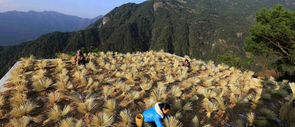 Villagers dry crops during harvest season in a village in Liuzhou, Guangxi Zhuang Autonomous Region, China October 22, 2017. Picture taken October 22, 2017. REUTERS/Stringer ATTENTION EDITORS - THIS IMAGE WAS PROVIDED BY A THIRD PARTY. CHINA OUT.     TPX IMAGES OF THE DAY - RC1620AE8BF0