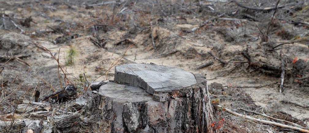 El año pasado se perdieron en los trópicos 11,9 millones de hectáreas de bosque en general
