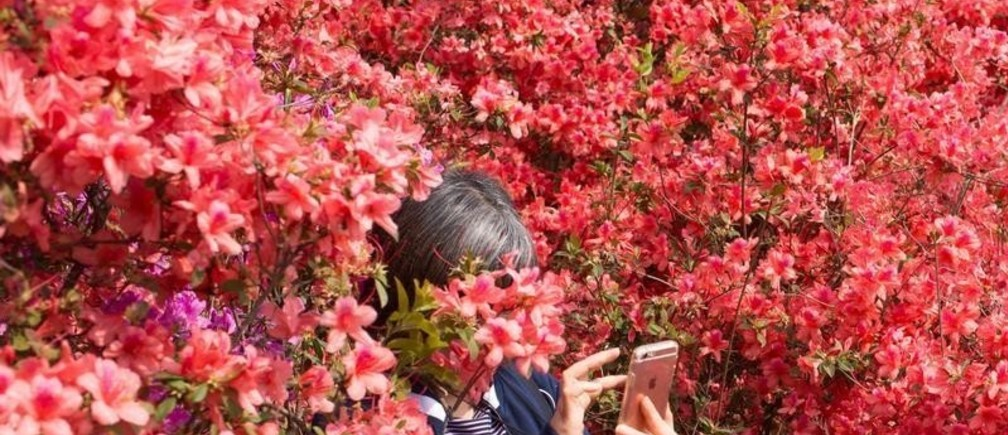 A woman holds her mobile phone as she stands amid flowers at the South China Botanical Garden in Guangzhou, Guandong province, China March 4, 2019. Picture taken March 4, 2019. Liang Weipei/Southern Metropolis Daily via REUTERS  ATTENTION EDITORS - THIS IMAGE WAS PROVIDED BY A THIRD PARTY. CHINA OUT. - RC11F049F2B0