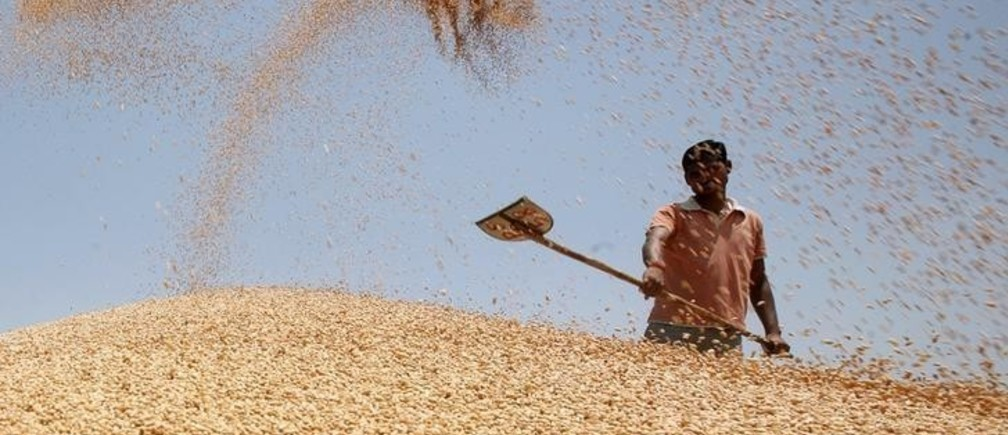 A labourer shovels wheat grain at a wholesale grain market on the outskirts of the northern Indian city of Amritsar May 13, 2013. India's plan to give millions more people cheap food will cost more than its forecast of 1.3 trillion rupees ($23.8 billion) a year and will accelerate inflation, a leading adviser on food issues for the government said in an interview.  To match Interview INDIA/FOOD    REUTERS/Munish Sharma (INDIA - Tags: AGRICULTURE BUSINESS POLITICS FOOD)