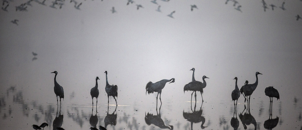 A flock of migrating cranes is seen at the Hula Lake Ornithology and Nature Park in northern Israel December 20, 2013. The Hula Valley is a stopping point for hundreds of species of birds along their migration route between the northern and southern hemispheres.