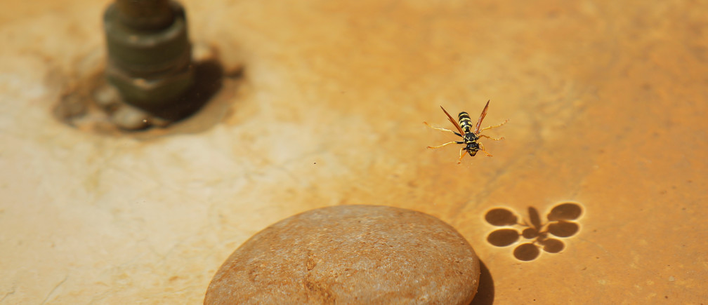 A wasp drinks water in a fountain in Ronda, southern Spain, as temperatures soar across Europe, August 3, 2018. REUTERS/Jon Nazca - RC1C2487EB30